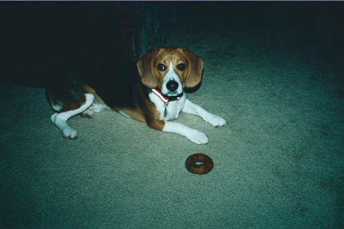 Doggy bagel about to be destroyed